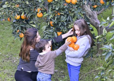 35-countryside-orange-picking-PH